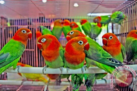 Balai karantina musnahkan 19 burung asal Tiongkok
