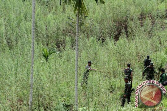 Polres Ogan Komering Ulu amankan pemilik ladang ganja