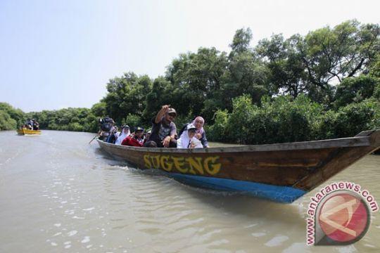 Mentari Internasional School tanam mangrove di Pariaman