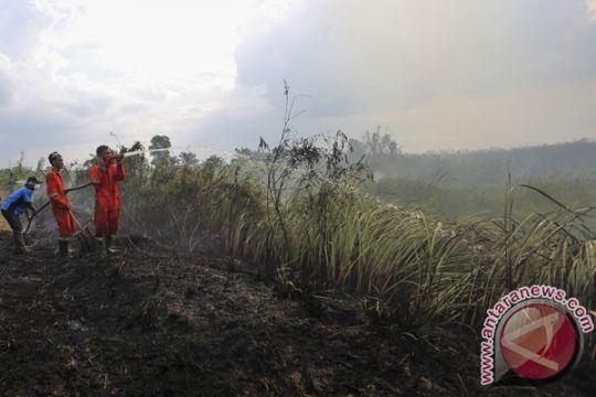 Wagub: Sumsel sudah lewati masa kritis kebakaran hutan