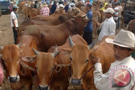 Tangerang fokus periksa hewan kurban dari daerah