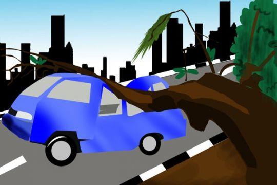 Seorang pembonceng motor tewas tertimpa pohon tumbang