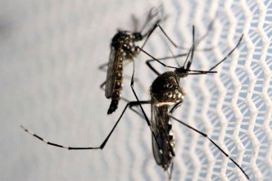 Cegah penyebaran virus zika dengan PSN
