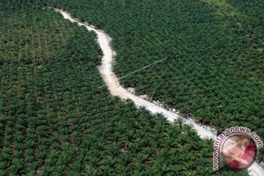 Ekspor CPO Riau triwulan I 2019 turun 23 persen