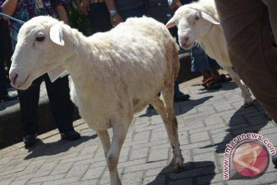Jatim dijadikan proyek percontohan program domba nasional