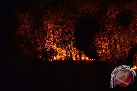 Kebakaran hutan TN Baluran ganggu lalu lintas Pantura