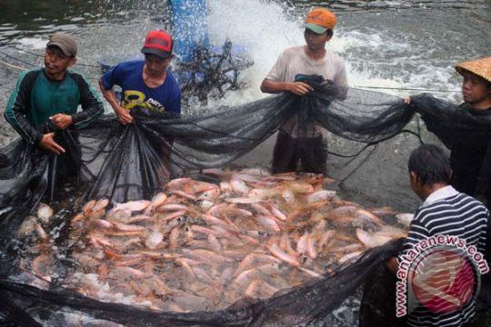 Pemkab Lebak targetkan jadi lumbung ikan air tawar nasional