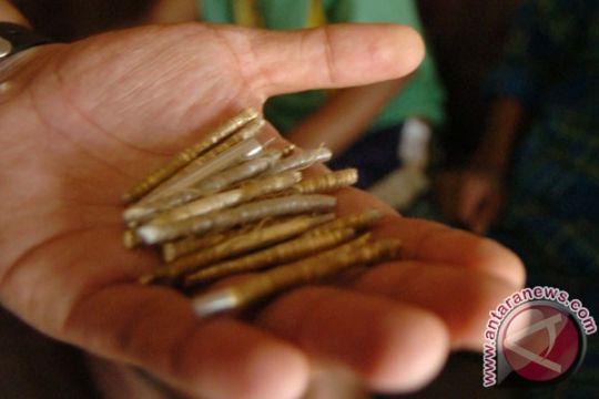 183 detonator dicuri dari gudang PT Adaro Indonesia