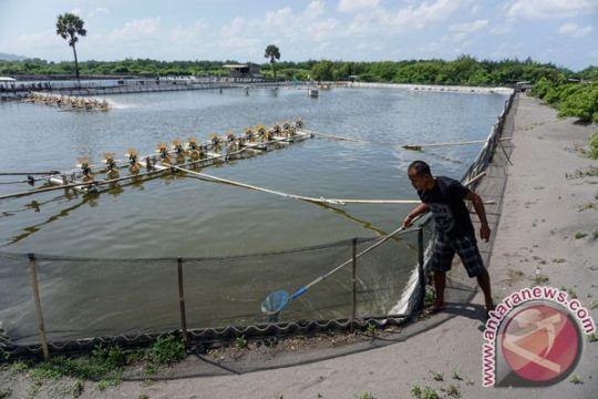 40 hektare tambak udang Kulon Progo raib termakan NYIA