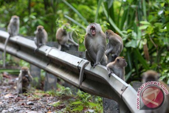 IAR Indonesia lepasliarkan 24 primata ke Lampung