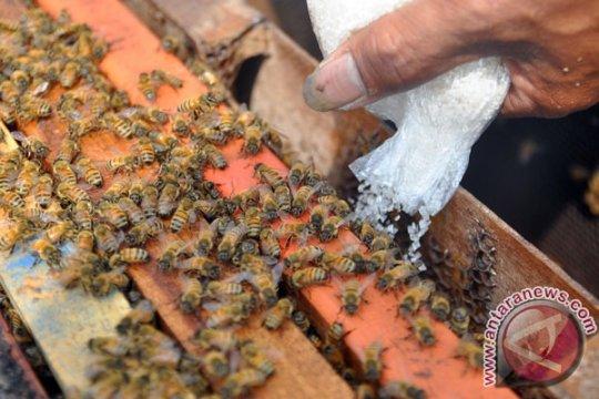 Terapis gunakan bisa lebah untuk obati pasien