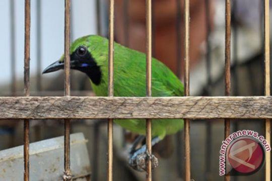 Maling burung murai babak-belur dihajar massa