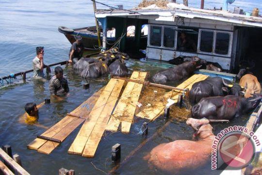 Kapal penumpang karam di perairan Makassar
