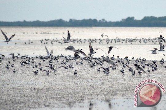 Burung air sulit beradaptasi karena alam semakin rusak