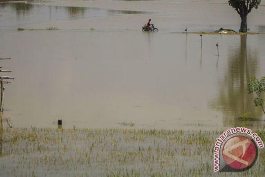 Banjir Bengawan Solo di hilir Jatim surut
