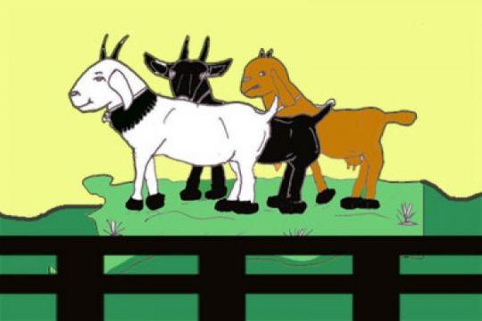 ANTARA Doeloe: Dulu ada demonstrasi memerah susu kambing