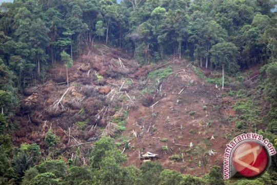 KLKH dan Polda Riau sita 49 ribu kubik kayu dari SM Rimbang Baling