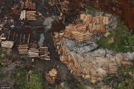 Konservasionis Brazil kembangkan alat pelacak asal kayu