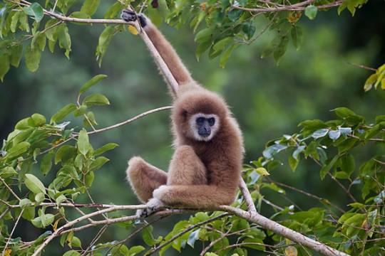 Taman nasional Thailand diberi status warisan UNESCO di tengah isu HAM
