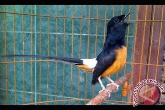 Polair Polda Kepri gagalkan penyelundupan 1.115 burung dari Malaysia