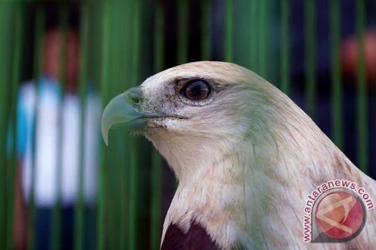 BKSDA Agam lepasliarkan 15 ekor burung dilindungi