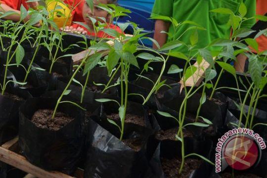 Surabaya akan tanam satu juta bibit cabai