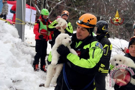 24 orang tewas akibat salju longsor di Italia
