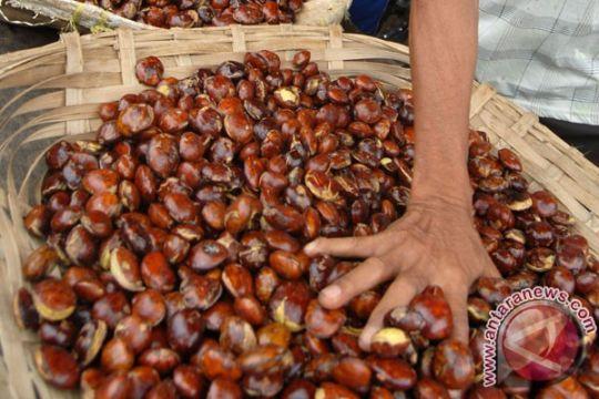 """Pencurian jengkol di Aceh Utara berakhir dengan """"salaman"""""""
