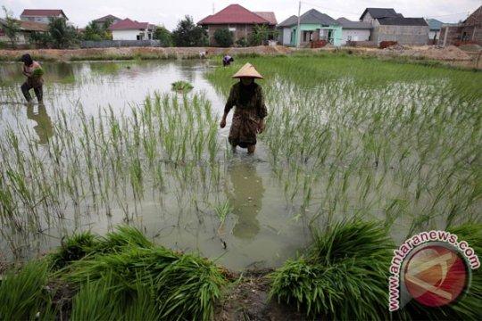 Bener Meriah, Aceh buka  kawasan transmigrasi