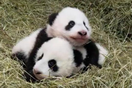 Jurnalis Purwokerto kirim boneka panda untuk FPI