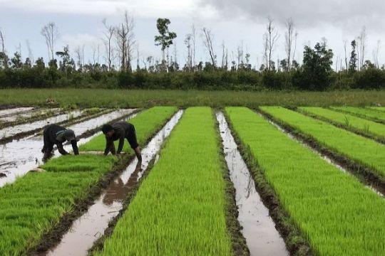 Pemprov Kalteng segera terbitkan Pergub pemanfaatan lahan gambut