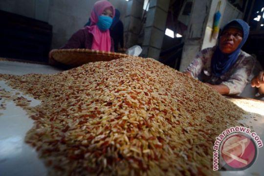 Potensi nilai ekspor komoditas beras organik capai Rp.3 miliar/tahun