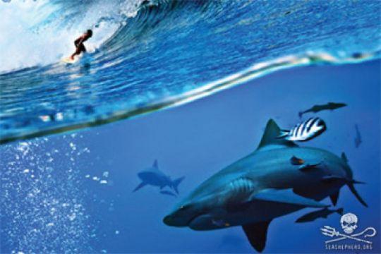 Seorang pria tewas diserang hiu di La Reunion