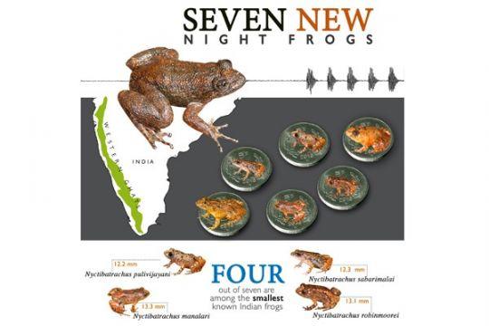 Ilmuwan temukan spesies baru katak kecil di India