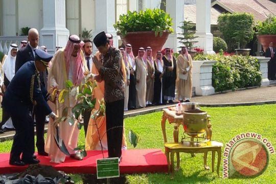 Raja Salman tanam pohon ulin di halaman Istana