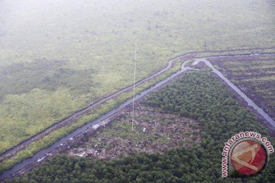 Walhi Sumsel minta hentikan penebangan hutan