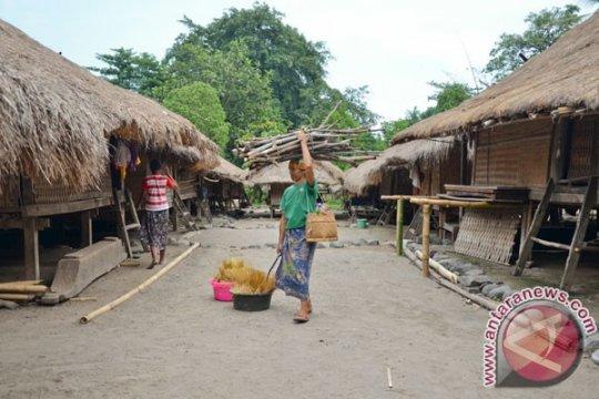 AMAN: perempuan adat dan alam tak terpisahkan