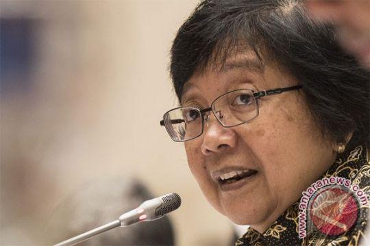 Menteri LHK: Tindak tegas pembantai orang utan