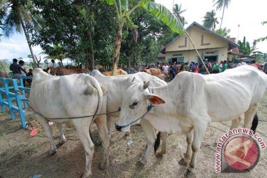 Gorontalo salurkan sapi untuk bantu berdayakan perekonomian warga kurang mampu