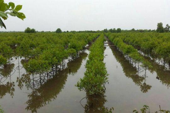 Warga beramai-ramai tanam ribuan bakau