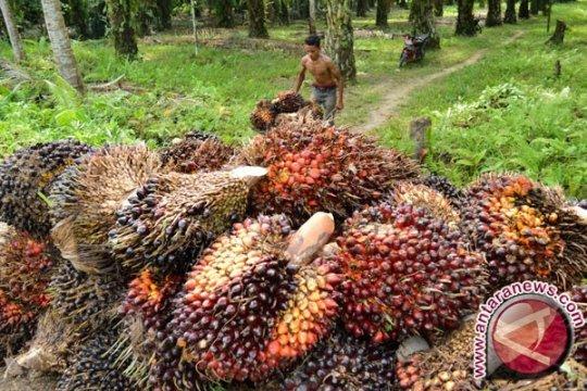 Harga CPO di Jambi naik, dekati angka Rp6.800/kg