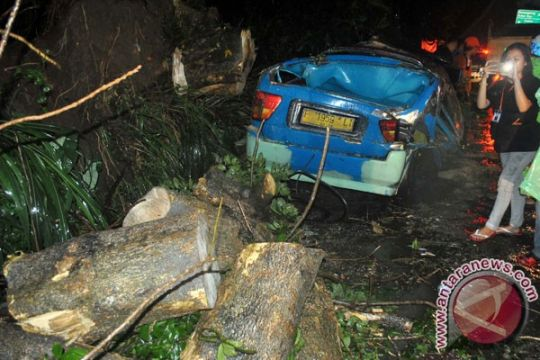 Sebuah angkot ringsek tertimpa pohon tumbang, sopir dilarikan ke RS