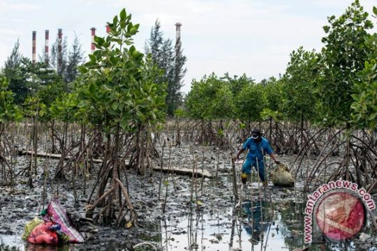Kawasan pesisir utara Jakarta akan ditanam lebih banyak pohon bakau