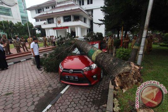 Tiga mobil ringsek tertimpa pohon tumbang di Malang