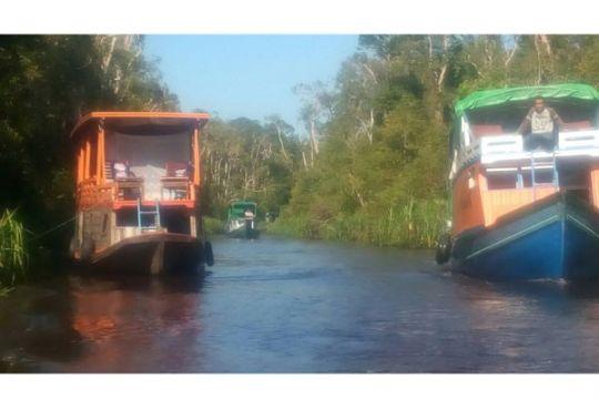 Kunjungan wisnus lampaui wisman di Tanjung Puting