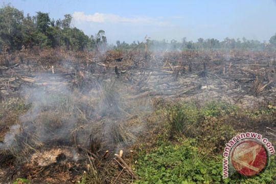 Kebakaran landa 6,5 hektare hutan di Nagan Raya