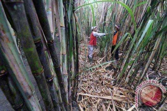 Petani laporkan peredaran gula rafinasi ke Bareskrim