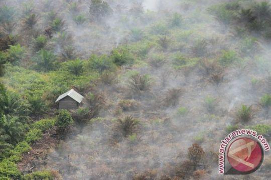 Setengah tahun ini, karhutla landa 375,1 hektare di Bengkalis