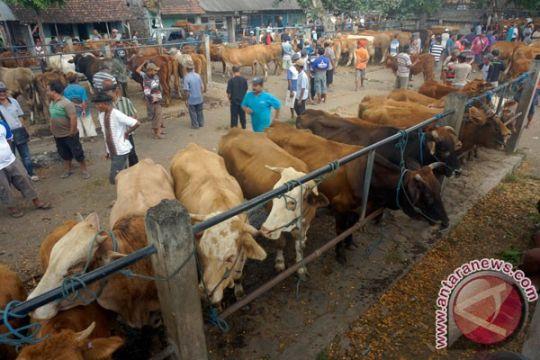 Pedagang hewan kurban di Palembang mulai bermunculan