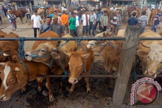 Tim kesehatan hewan kurban sasar pasar ternak